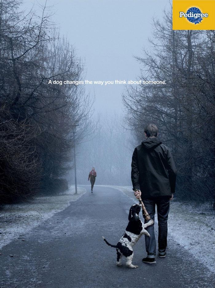 campanha adote um cachorro pedigree 10