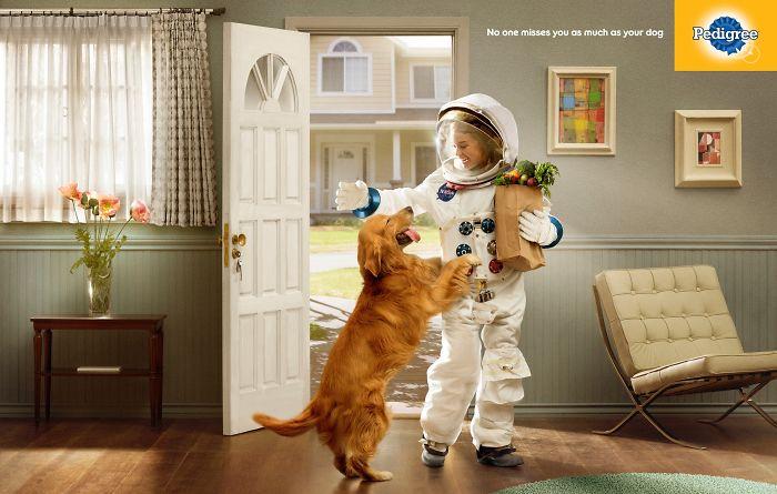 campanha adote um cachorro pedigree 13