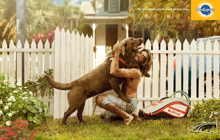 campanha adote um cachorro pedigree 14