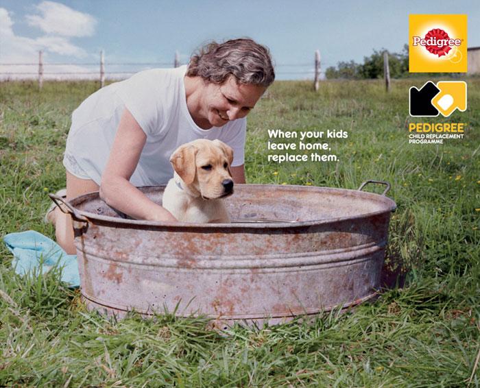 campanha adote um cachorro pedigree 2