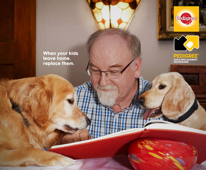 campanha adote um cachorro pedigree 4