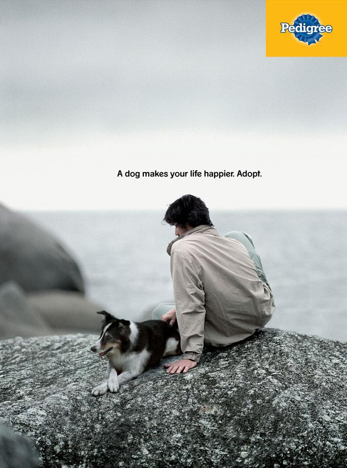campanha adote um cachorro pedigree 6