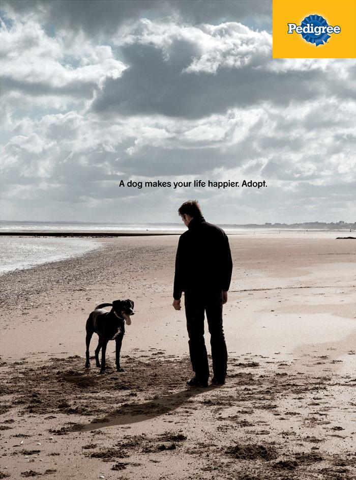 campanha adote um cachorro pedigree 8