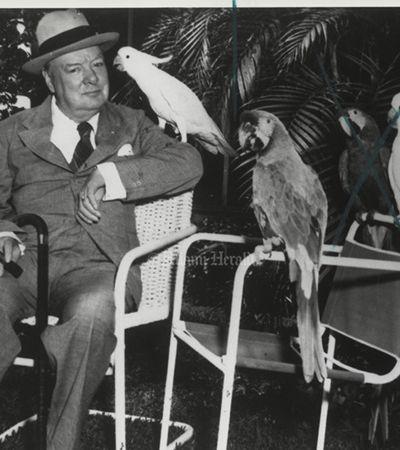 'Maldito Hitler!' Com mais de 100 anos, arara de Winston Churchill passa o dia xingando nazistas