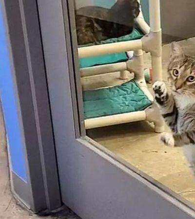 Este gato abriu a porta de abrigo, soltou os parças e foi colocado na solitária