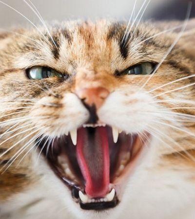 Homem pode enfrentar 5 anos de prisão por usar gato como arma contra a polícia