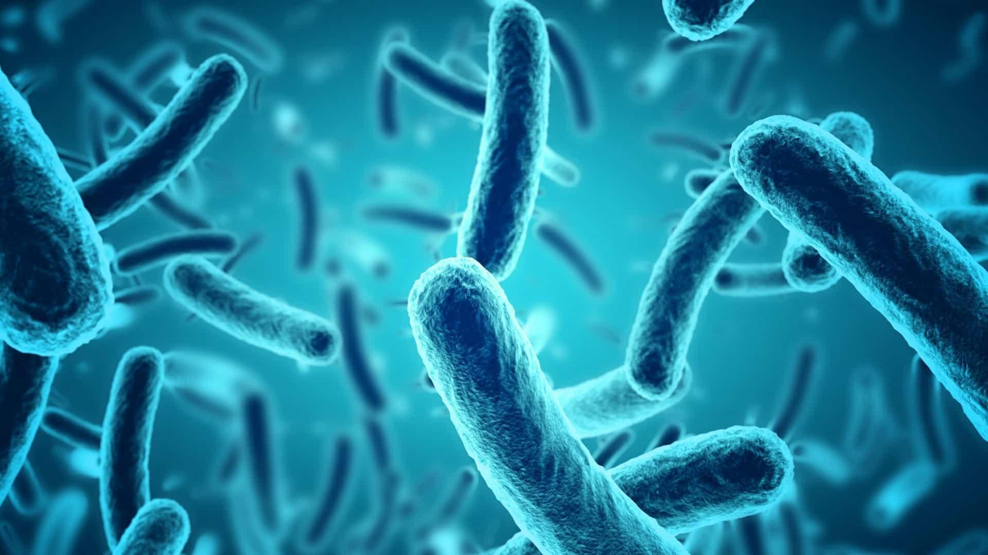 gravata dos médicos bactérias 2