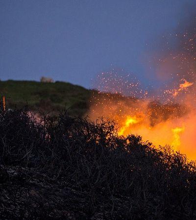 O que é o 'gel vegetal' que pode prevenir incêndios florestais