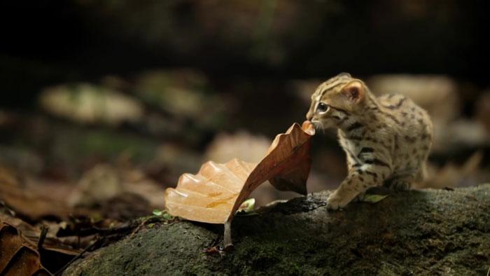 menor gato do mundo 1