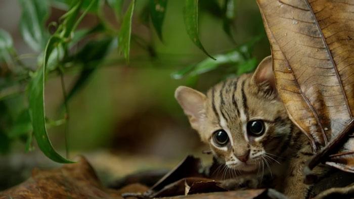 menor gato do mundo 2