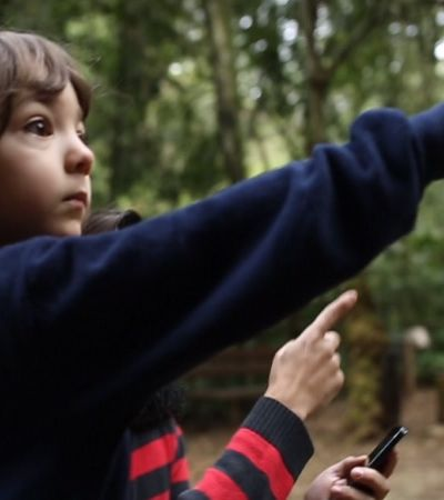 App usa contos para ensinar crianças a identificarem árvores
