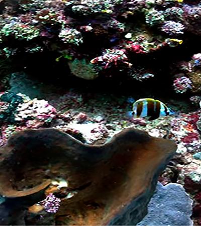Cientistas criam algoritmo que tira embaçado de fotos no fundo do mar; veja antes e depois