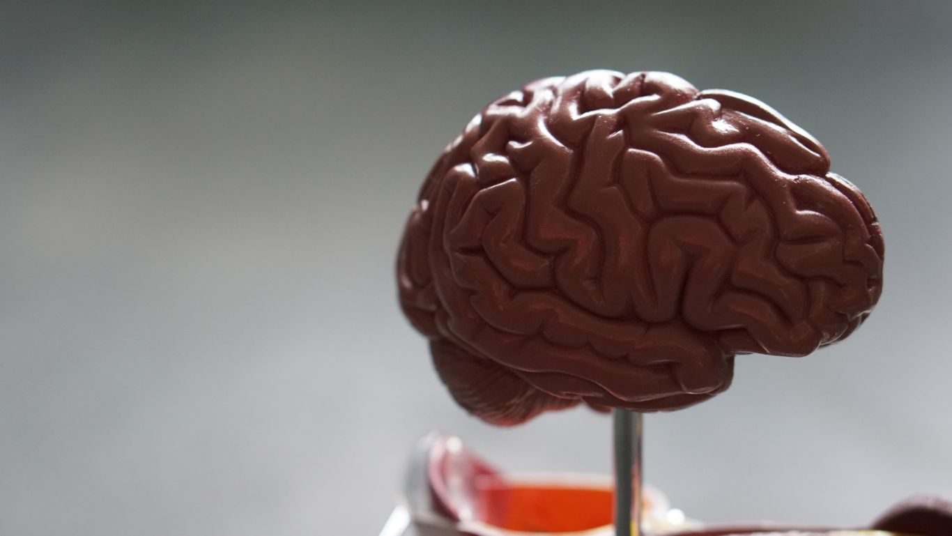 usar muito o cérebro 5jpg