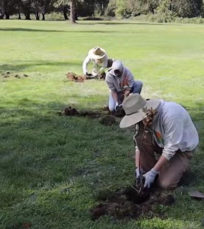Youtuber comemora 20 milhões de inscritos financiando plantio de 20 milhões de árvores