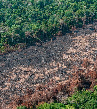 Pesquisador diz que Amazônia pode atingir nível 'de não retorno' se desmatamento continuar