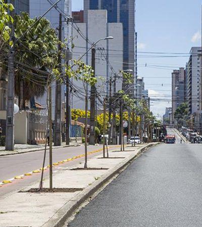 Curitiba vai plantar 1 mil ipês em avenida; meio ambiente agradece