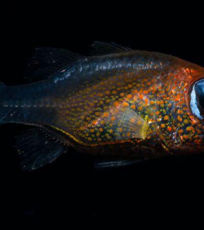 25 fotos de novas espécies descobertas pelos cientistas em 2019