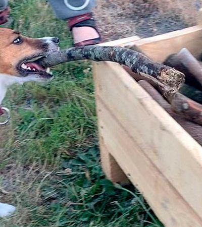 Ele construiu uma 'gravetoteca' para entreter os cães que passeiam por este parque
