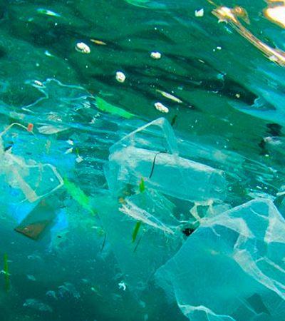 Invasão de plástico ameaça 'berçário' de peixes e alarma pesquisadores