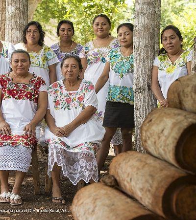 Mulheres maias protegem abelhas da extinção no sul do México