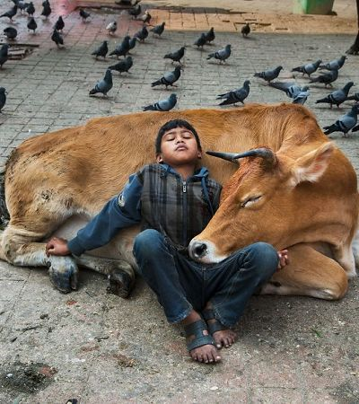 Fotografias retratam relação de amor entre animais e seres humanos