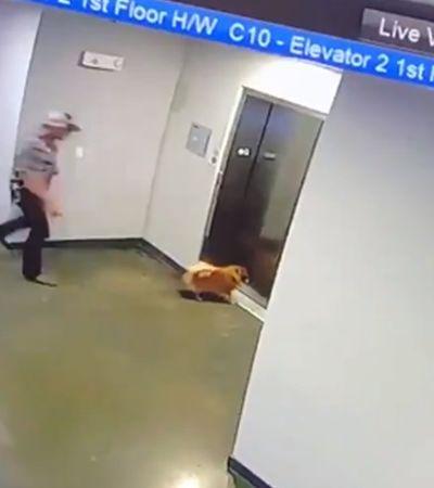 Ele agiu rápido e salvou cachorro preso com coleira em elevador; veja vídeo