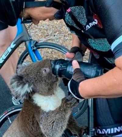 Coala pede água para ciclista; incêndios mataram quase 10 mil na Austrália