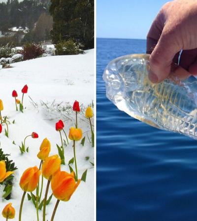 O mundo é incrível: 20 fotos fascinantes de coisas raramente vistas