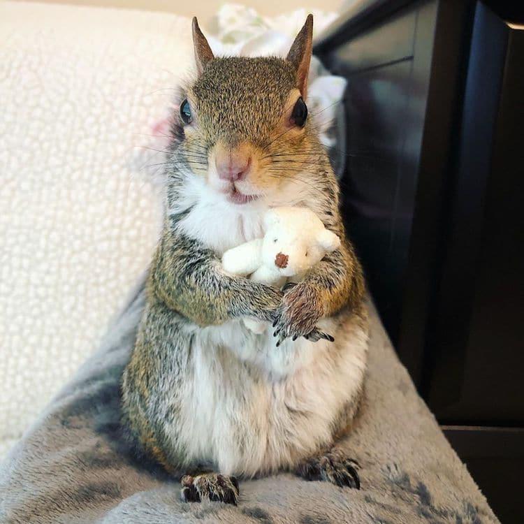 esquilo femea jill 1