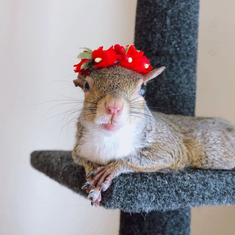 esquilo femea jill 2