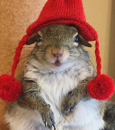 Esta adorável esquilo fêmea resgatada agora é uma 'influenciadora' famosa no Instagram