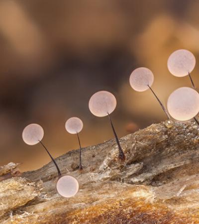 Fotos em macro apresentam o fantástico universo dos cogumelos