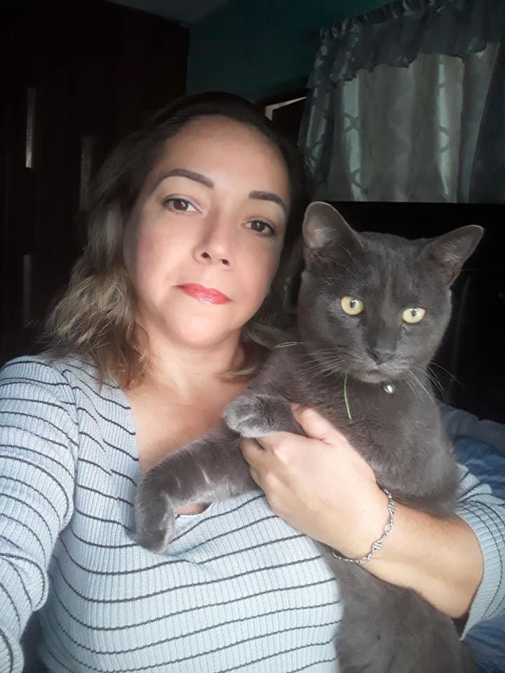 gato com vida dupla 1