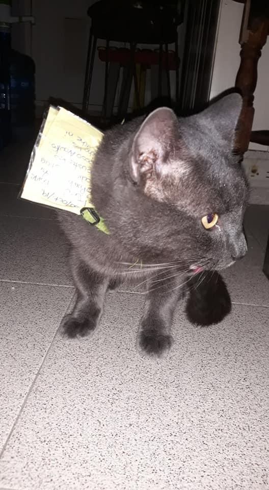 gato com vida dupla 3