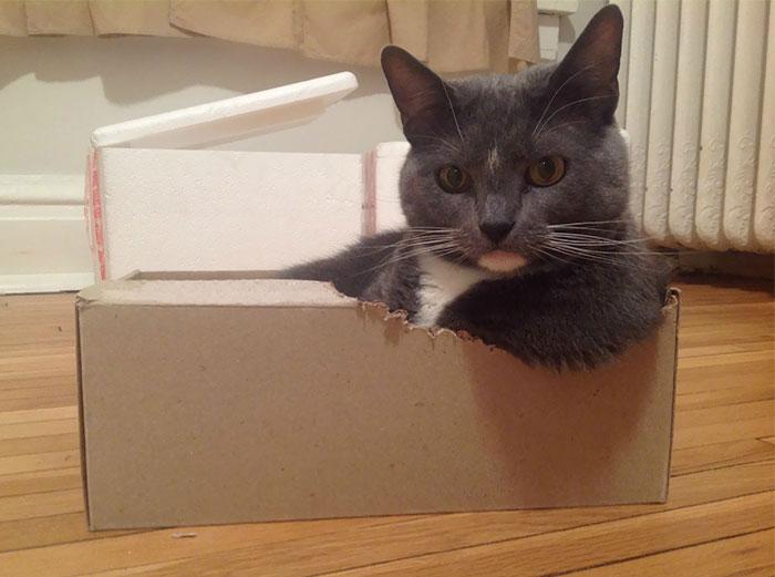 gato nas caixas 1