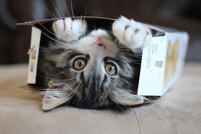 gato nas caixas 2