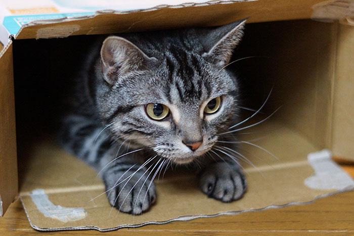 gato nas caixas 3