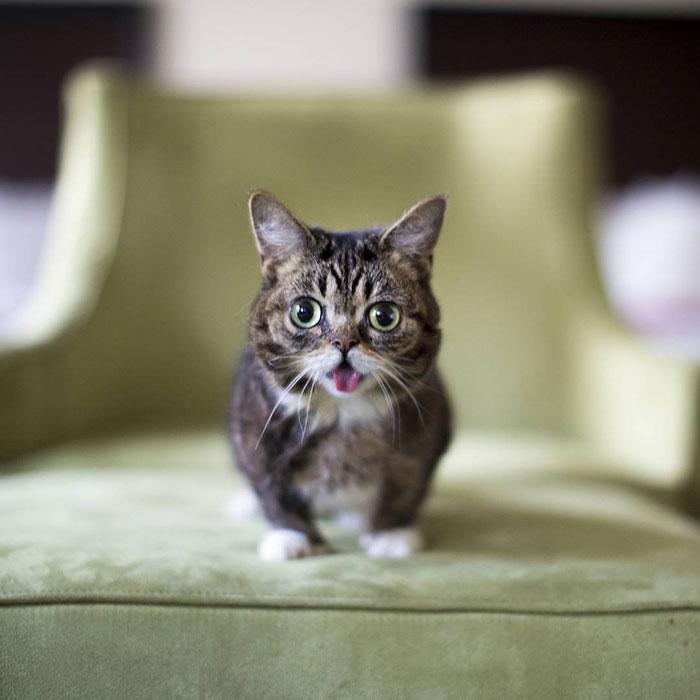 morte de gato famoso 3