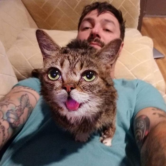 morte de gato famoso 7