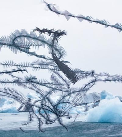 Essas fotos capturam os incríveis trajetos de vôo percorridos por bandos de pássaros