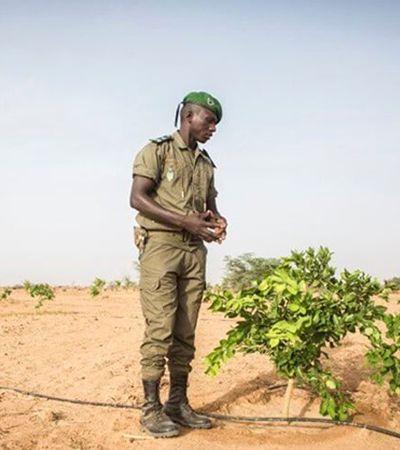 África irá plantar 8 mil km de árvores para construir a maior estrutura viva do planeta