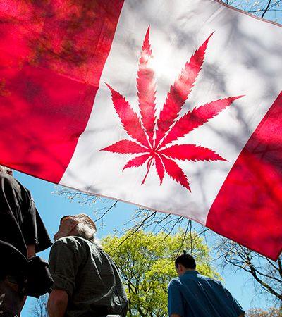 Mercado da maconha perde fôlego e acumula perdas 1 ano após legalização no Canadá