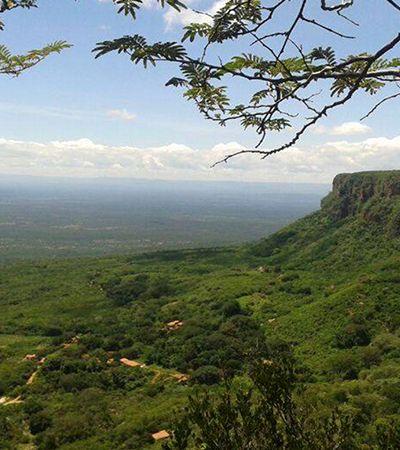 Piauí é o estado com mais florestas naturais preservadas fora da Amazônia