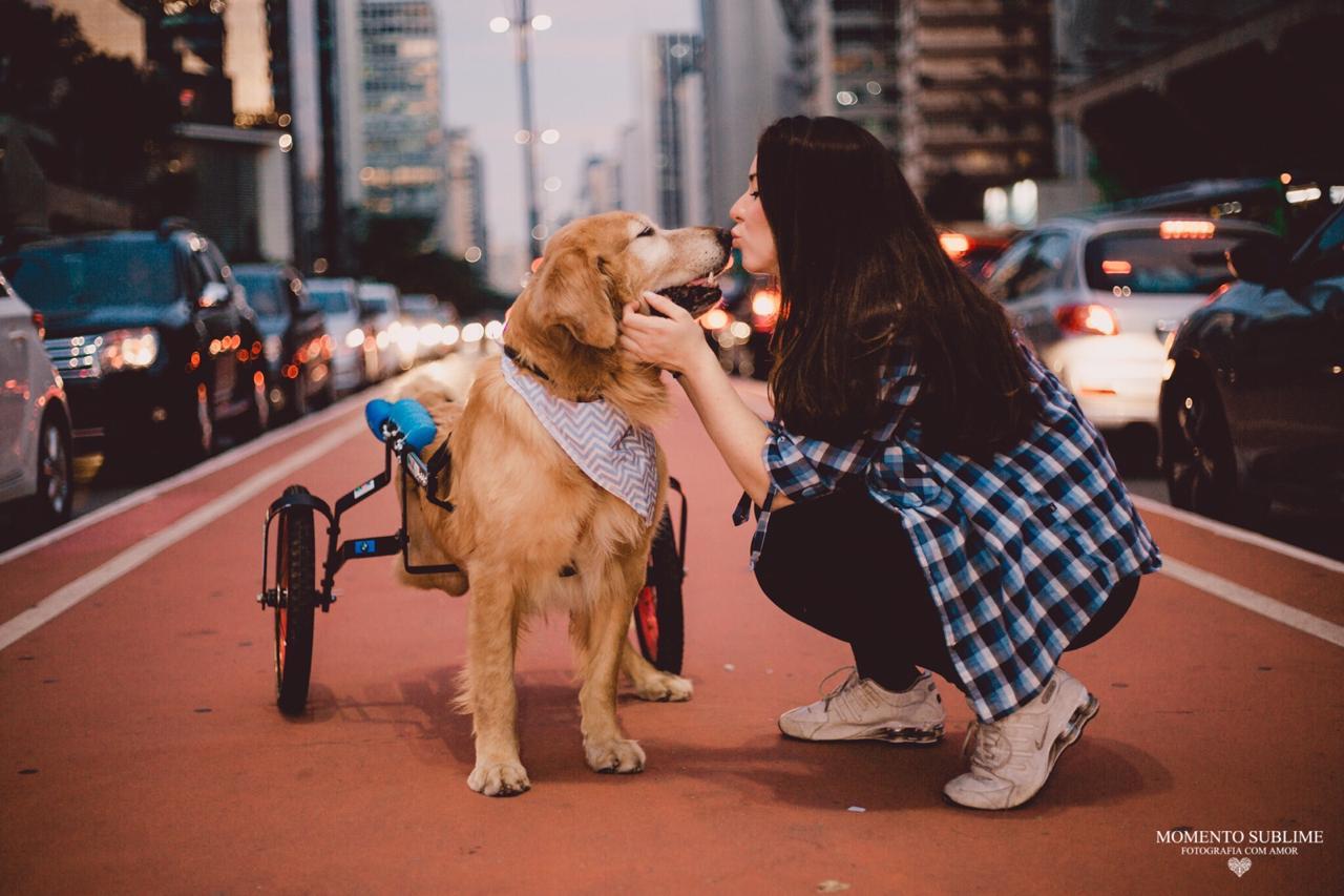 Troy cão especial 3
