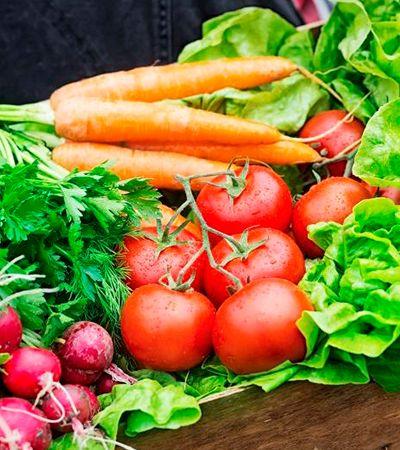 UFSC cria ferramenta com pontos de venda de alimentos orgânicos em SC