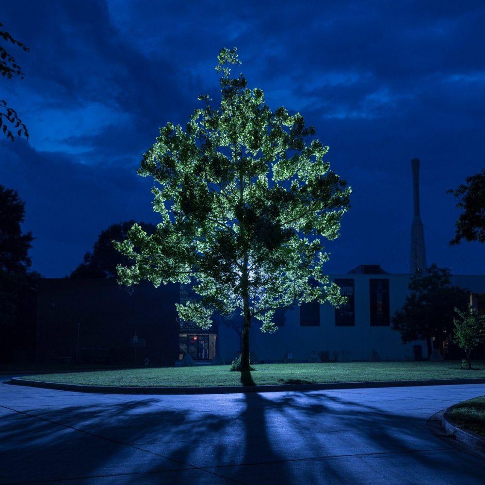 árvores lunares 1