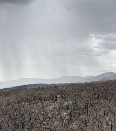 Austrália: chuva provoca reação emocionada de quem viveu maior incêndio da história
