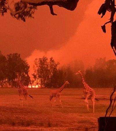 Fotos mostram o antes e depois de áreas destruídas pelo fogo na Austrália