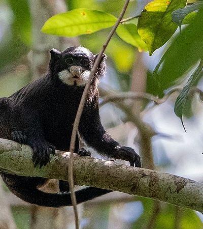 PL quer extinguir parque com maior biodiversidade da Amazônia para criar gado