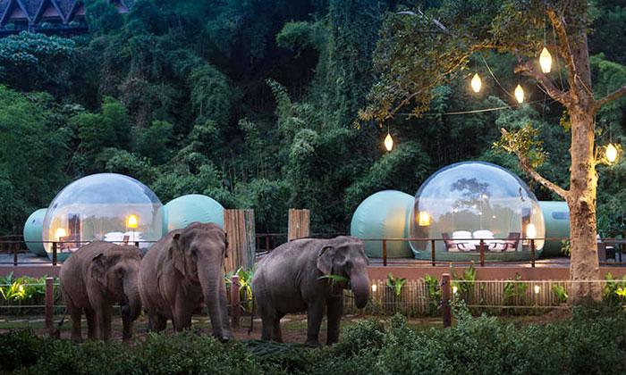 bolhas com elefantes 1